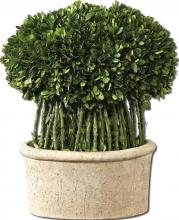 Uttermost 60108 - Uttermost Willow Topiary Preserved Boxwood